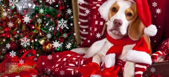 Красивые поделки на Новый год Собаки 2018