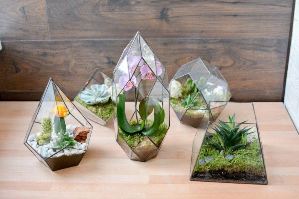 Закрытый флорариум необычной формы