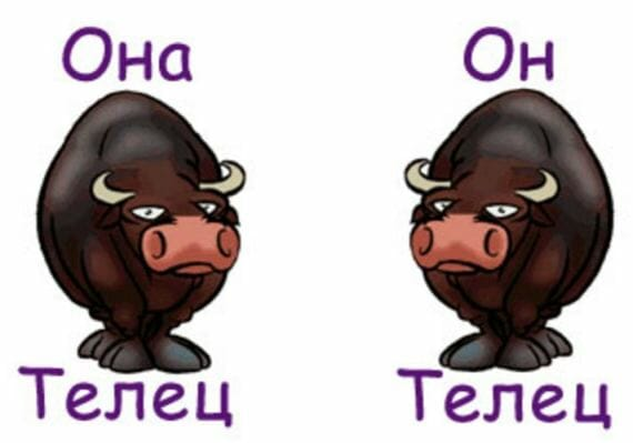 sovmestimost-telets-i-telets-v-lyubovnyh-otnosheniyah-i-druzhbe