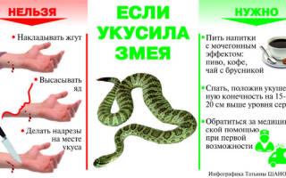 Что делать при укусе змеи – советы от школы первой помощи
