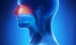 Гайморит: особенности заболевания. Эффективное лечение